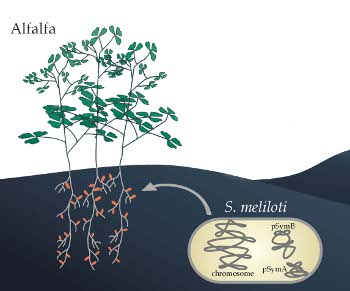 Bacterial Genome Sequencing